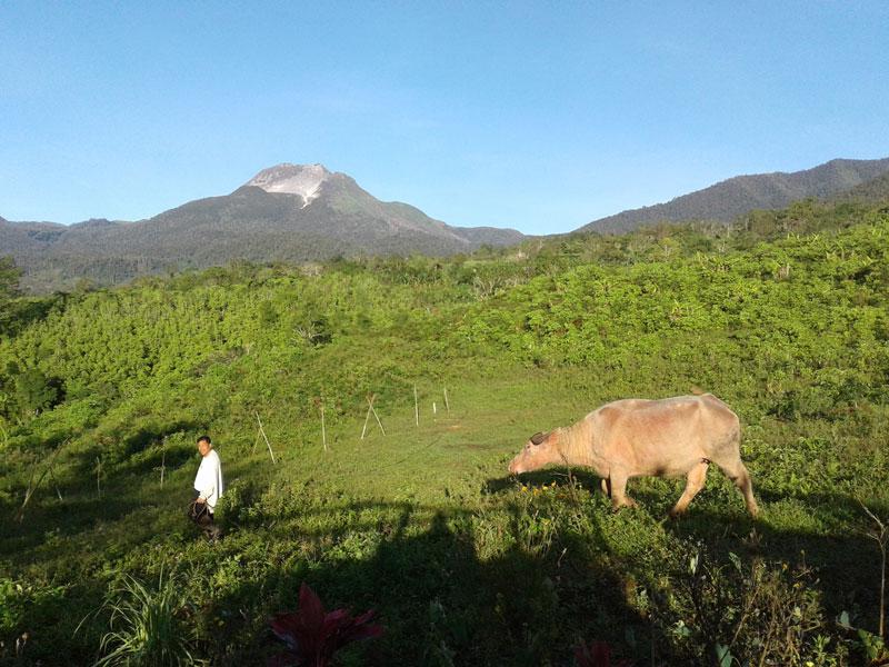 Brgy  Sibulan Soon to be Davao's First Organic Zone
